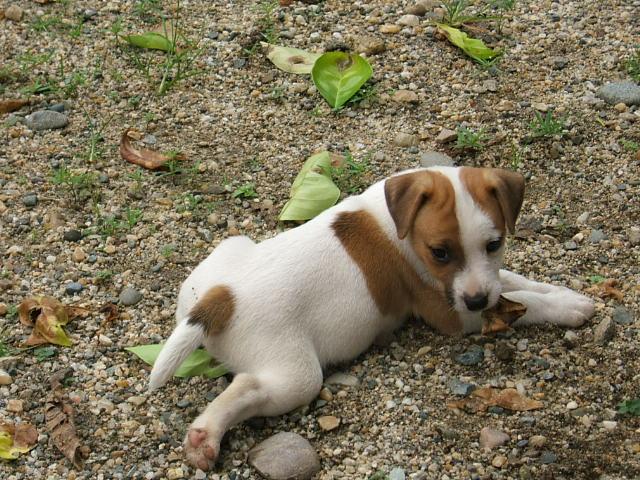http://www.pratsals.com/pratsals-puppieslitters
